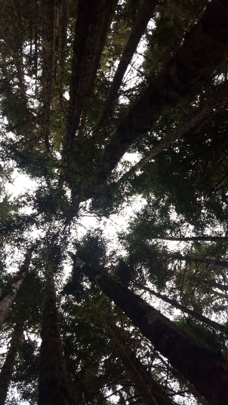 alberi sotto in su